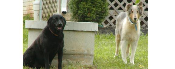 How Pets Enrich our lives (part 2)